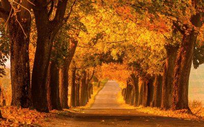 Herbstfahrt nach Mazuren